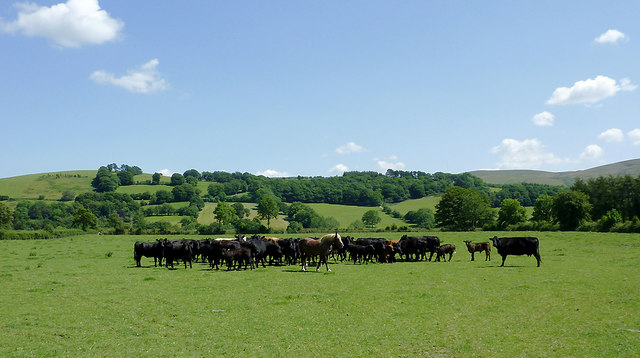 Grazing south-west of Tregaron, Ceredigion