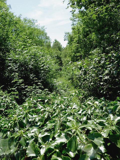 Overgrown railway trackbed south-west of Tregaron, Ceredigion