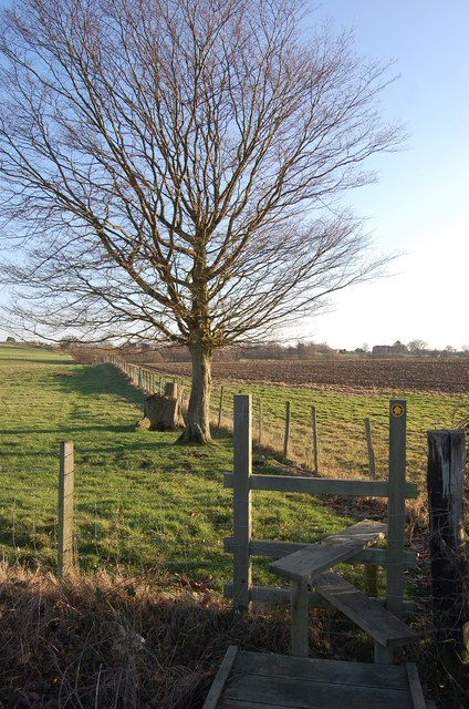 Stile and Tree, near Sussex Border Path