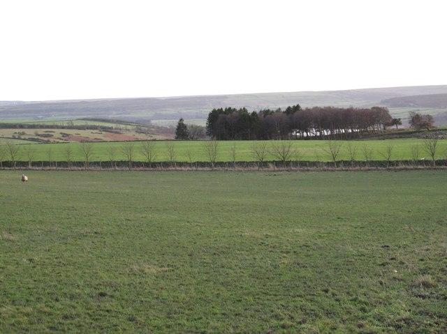 Farmland and Branshaw Plantation