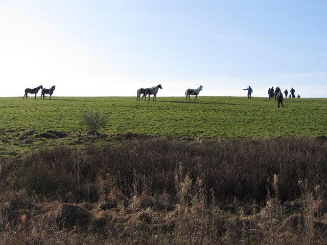 Fields and horses near Llanmihangel