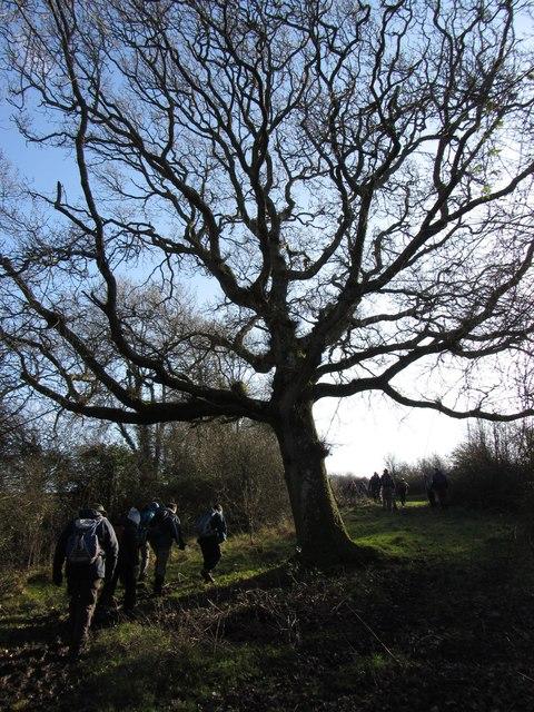 Footpath and tree near Llanmihangel