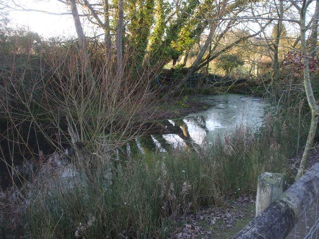 Pond, Old Cogan Hall Farm