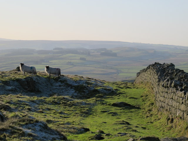 Hadrian's Wall east of Milecastle 41