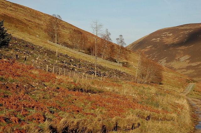 Corner of a felled plantation, Glen Sax