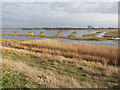 TL4786 : Ouse Washes RSPB reserve by Hugh Venables