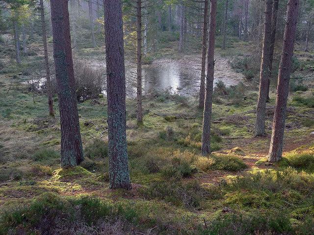 Lochan in Culbokie Wood