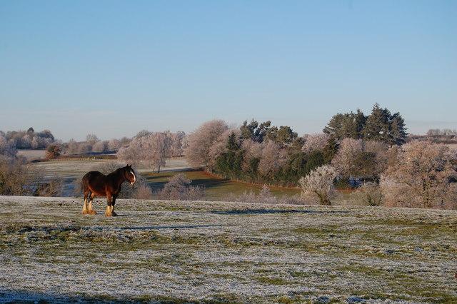 Heavy horse catching sunshine