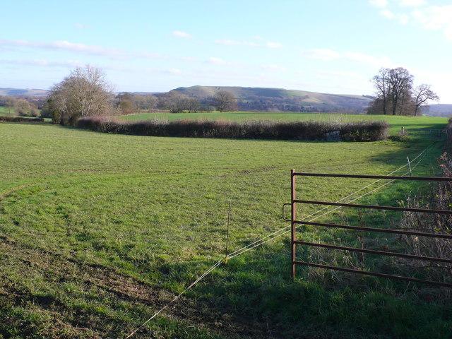 Fields near Child Okeford