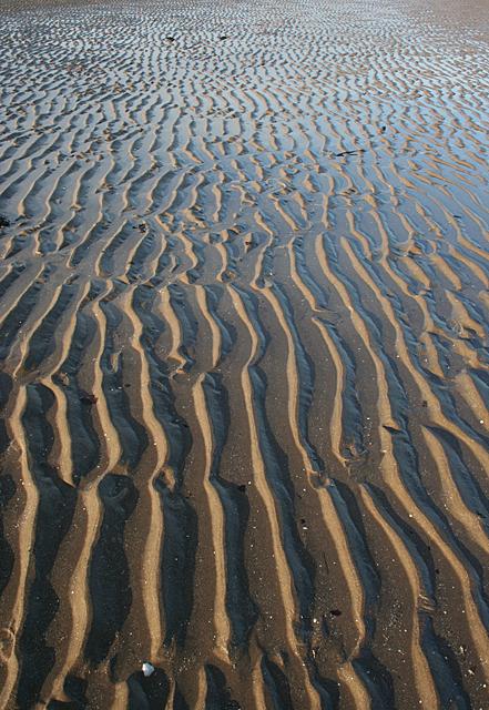 Wet Tidal Ripples