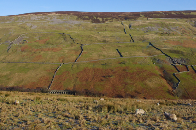 Winterings Pastures