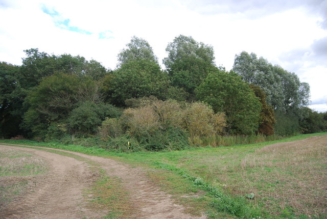Woodland by the bridleway from Akenham