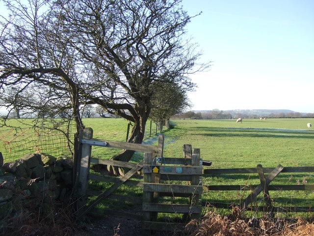 Footpath towards Bramhope