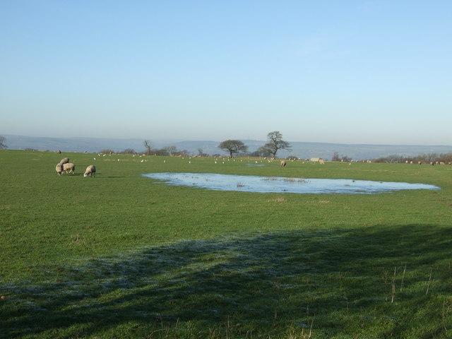 Grazing land off Arthington Road