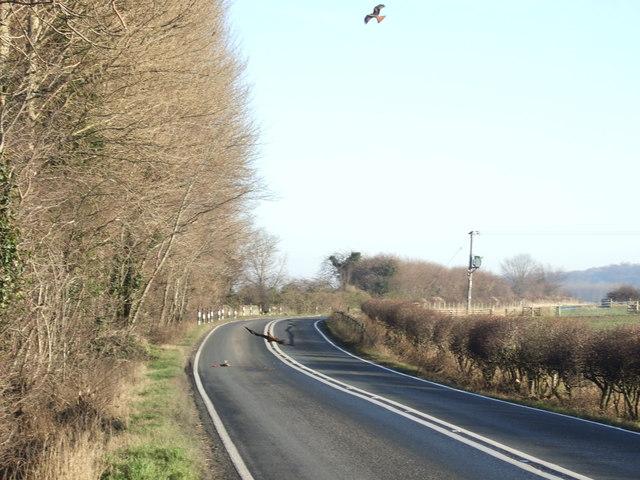 Red Kites over Arthington Lane