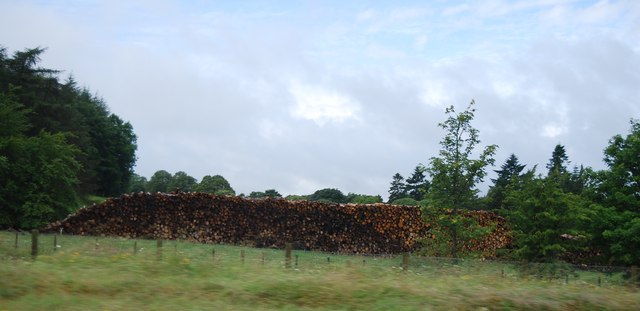 Log pile by the A74(M)