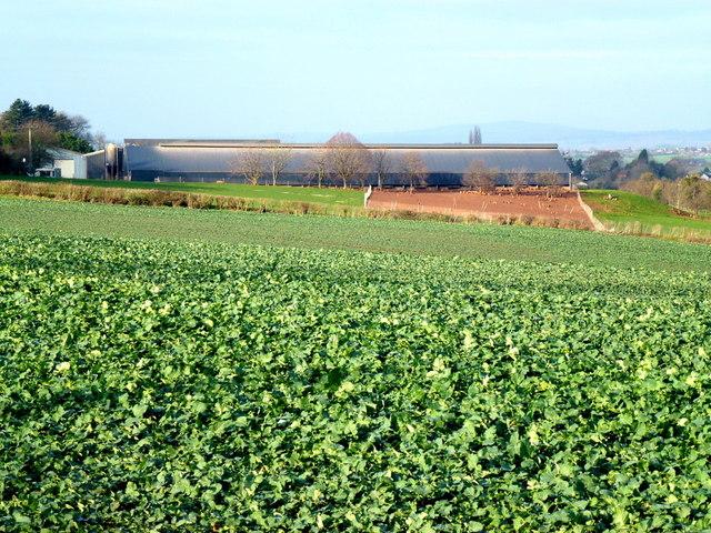 Porch Farm from afar