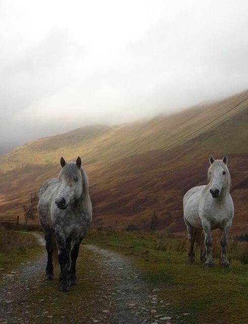 White horses in Srath a' Ghlinne