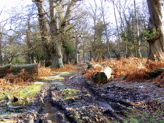 Muddy Path through the New Forest
