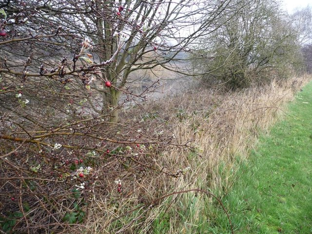 All the seasons along the Trans Pennine Trail