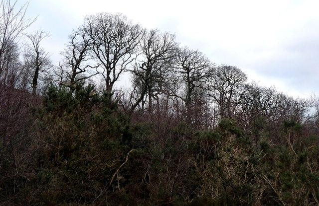 The mixed woodland of Big Park