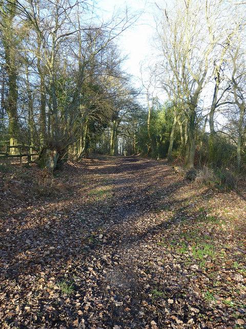 Leafy Lane past Pavis Wood