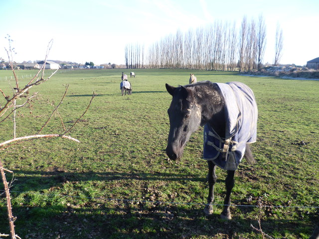 Horse near Darns Hill