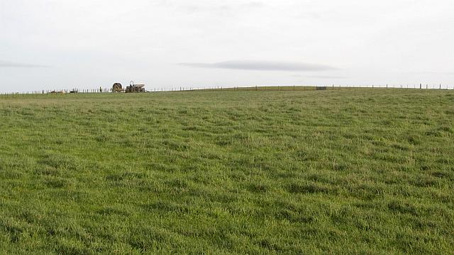 Pasture, Lamberton Moor