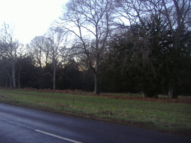 Ranmore Common