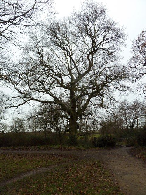 A New Year's Eve Eve Walk (51)