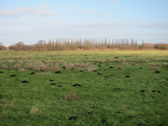 Countryside Stewardship area