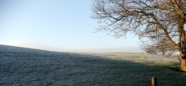 Fields Adjoining Holywell Dene