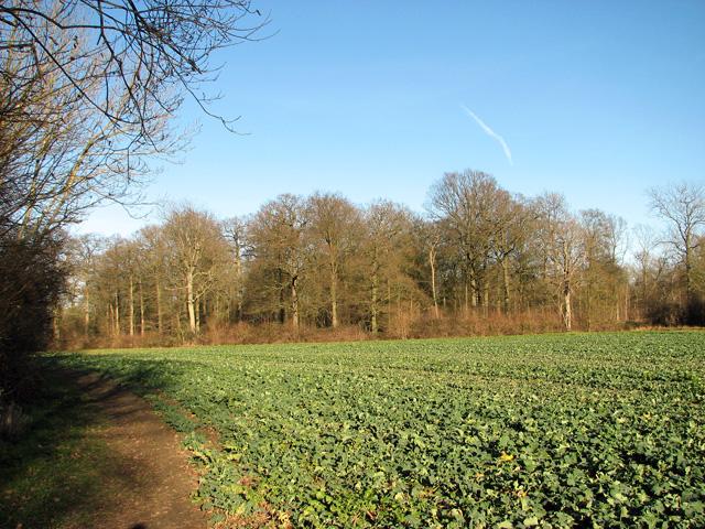 Park Wood, Easton