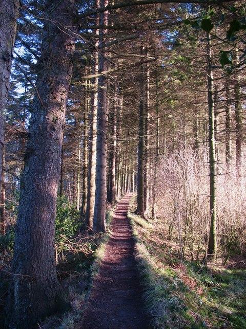 Path through the plantation