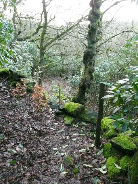 Woodland path, Cragg Vale