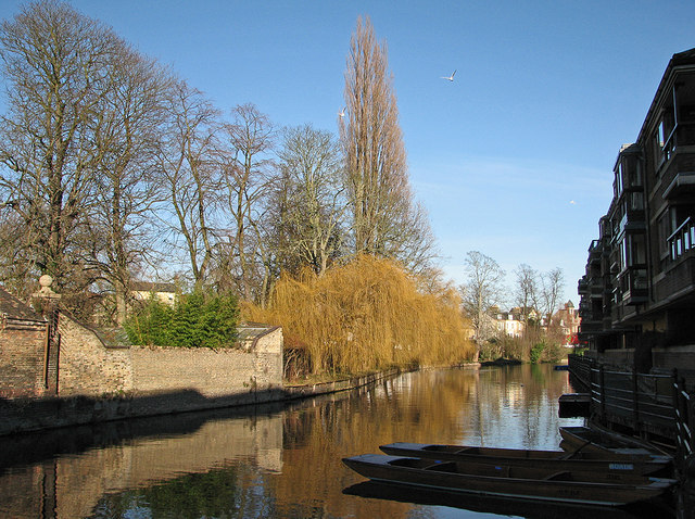 The Cam in January