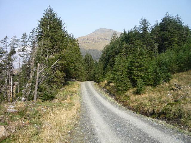 Forestry track below Ben Donich