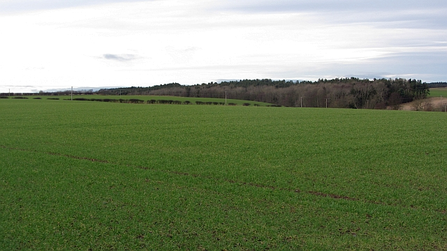 Winter crops, Ancroft