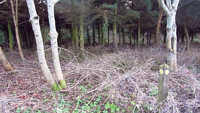 Woodland, Ancroft Southmoor