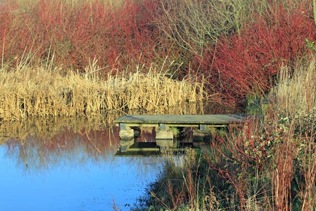 Monk Bretton Park Pond