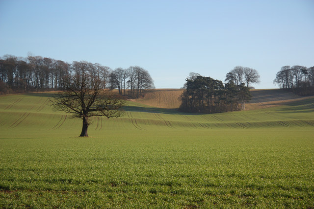 Nether Field