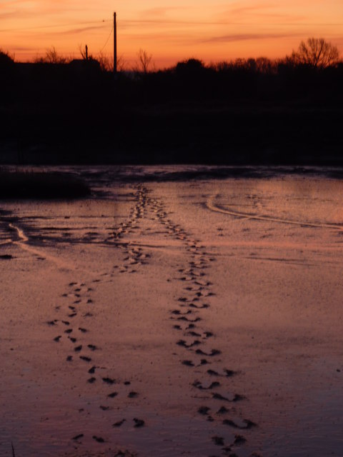 Footprints in the mud at Oare Creek