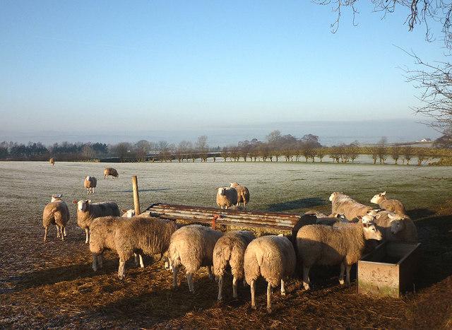 Sheep feeder near Row, Ousby