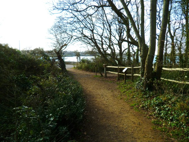 Path in Salterns Wood approaches Chichester Channel