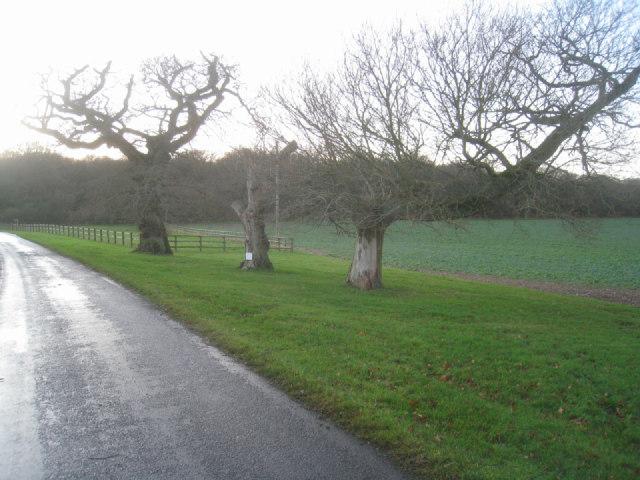 Lane to Breach Farm