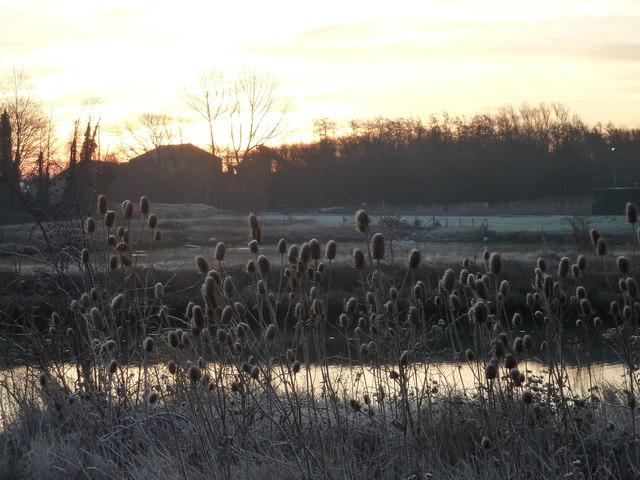 Frosted teasels by a pond near Oare Creek