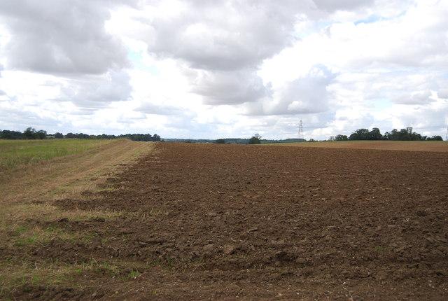 Farmland, Rise Hall Farm