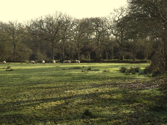 Sheep pasture by the Tarka Trail