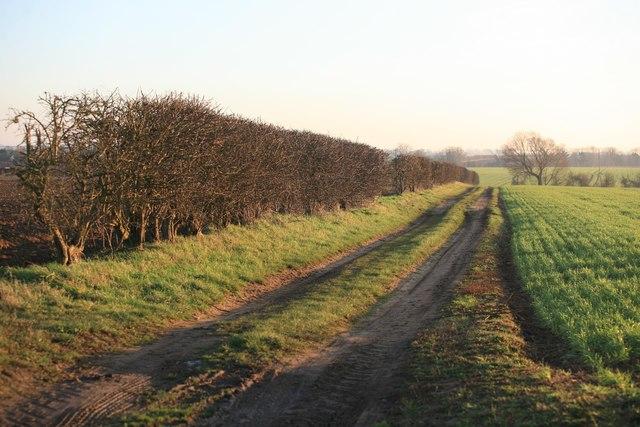 Farm track off Marton Lane