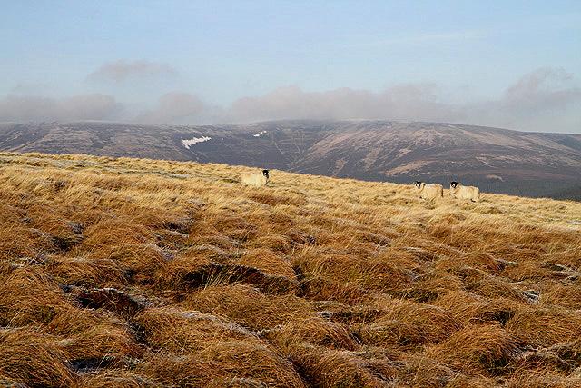North Hawkshaw Ridge